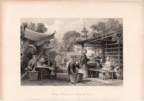 Feeding Silkworms, and Sorting the Cocoons. [China Antique Print]. THOMAS ALLOM.