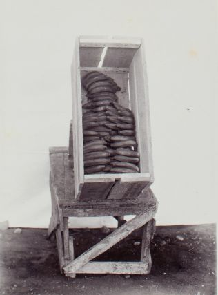 Album of photographs documenting the banana trade in East Java, 1925.
