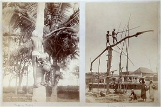 Madras Toddyman Climbing a Tree. [AND] Sweep Well. 19TH CENTURY PHOTOGRAPH